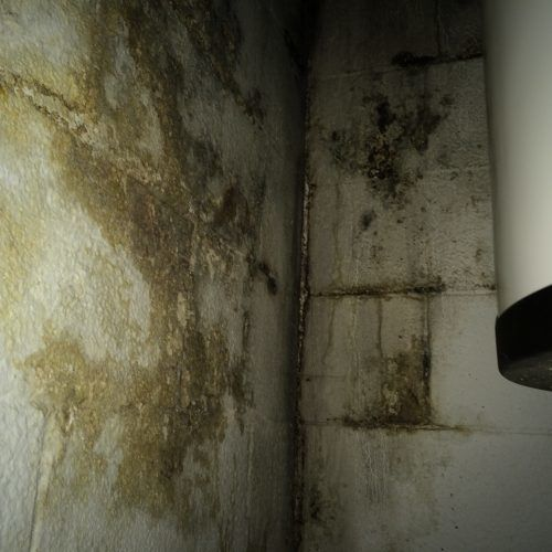 Foundation ResQ | Moldy Basement Walls | Mold Remediation
